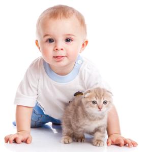 Ребенок попросил котенка к чему готовиться родителям