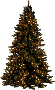 Выбираем натуральную новогоднюю елку