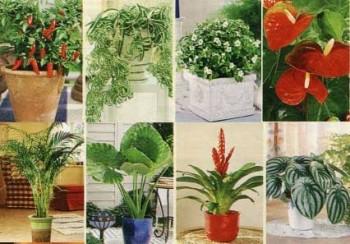 Комнатное цветоводство десять секретов успеха